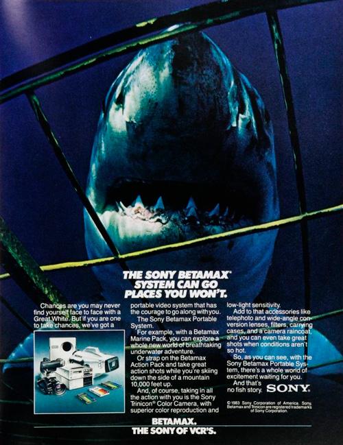 винтажный плакат с акулой
